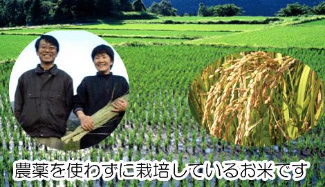 農薬を使わずに栽培しているお米です