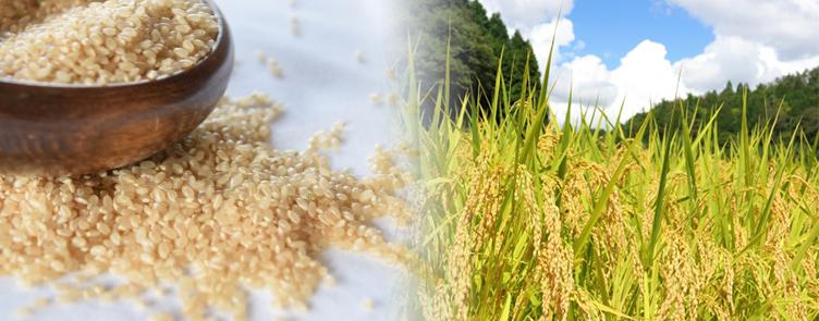 玄米は完全栄養食